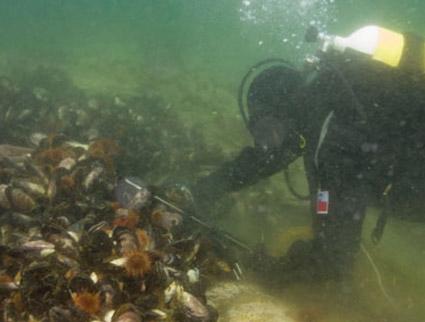 Expedición monitoreo de contaminantes en la trama trófica costera de Patagonia