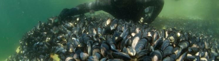 Evaluación Estado de Pesca Artesanal en Melimoyu.