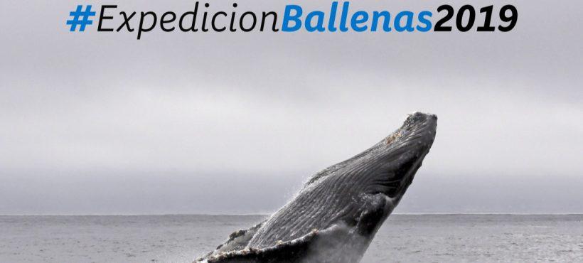 Una nueva expedición para (re)conocer a la ballena azul