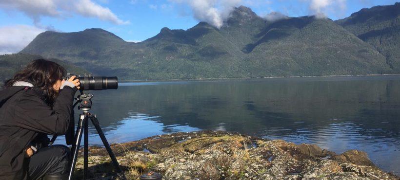 Las expediciones que nos acercan a la ballena sei y al delfín chileno