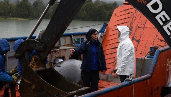 """[La Segunda] Entrevista a Sonia Español: """"Una regulación para proteger a las ballenas"""""""