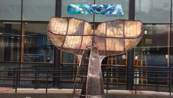 Escucha los ecos del mar en la exposición Cetácea