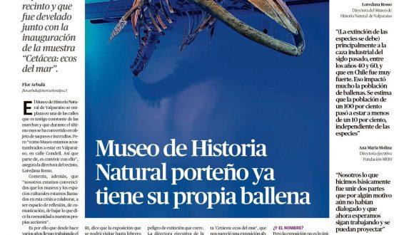 [Mercurio Valparaiso] Museo de historia natural porteño ya tiene su propia ballena