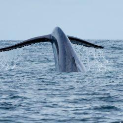 [Ministerio del Medio Ambiente] Ministerio del Medio Ambiente crea Comité Operativo para el Control del Ruido Submarino